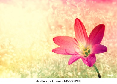 pink flower  with  colorful grass flower spring background