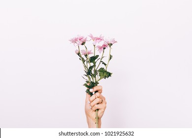 Pink flower in female hand with manicure on white background close-up
