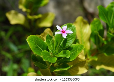Pink flower in the florest