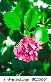 Pink flower in the garden