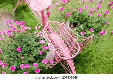 Pink flower in the garden or nature park Thailand