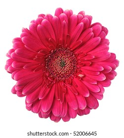 pink flower of gerbera isolated on white background