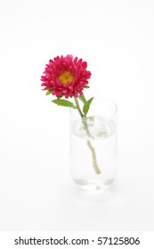 pink flower in a glass of water