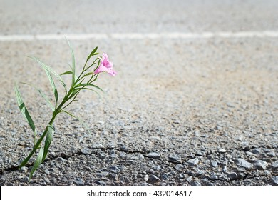 pink flower growing on crack street in sunshine, soft focus, blank text
