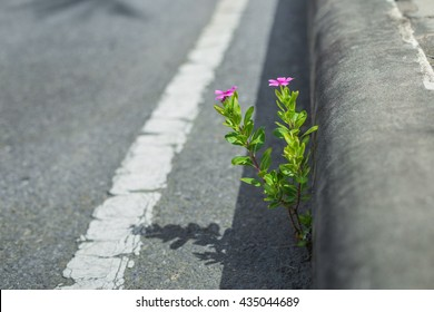 pink flower growing on footpath in the morning