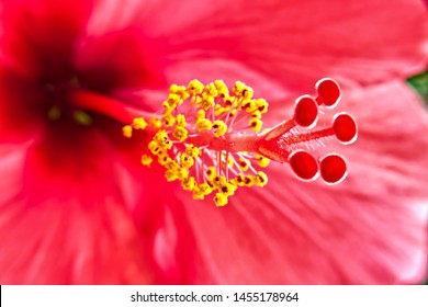 Stamen Images, Stock Photos & Vectors | Shutterstock