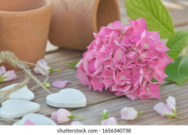 pink flower of an hydrangea put on a table with decorative heart and flower pots