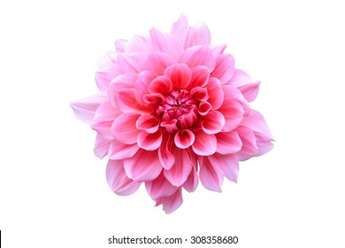 Pink Flower Isolate