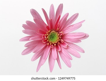 pink flower isolated on white background.