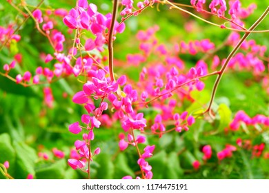 White flowers meaning images stock photos vectors shutterstock a pink flower means love which is called a clump of tropical flowers mightylinksfo