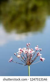 Pink flower on the background of the river