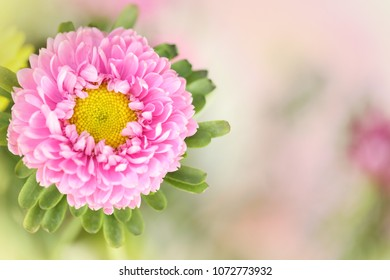 A pink flower on a blurred background.