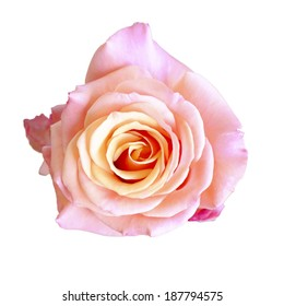 Pink flower on isolate background