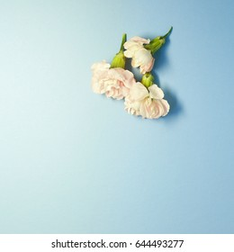 Pink flower on skyblue background. top view