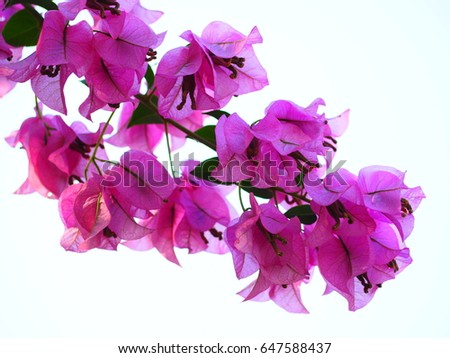 Pink Flower On White Background Flower Stock Photo Edit Now