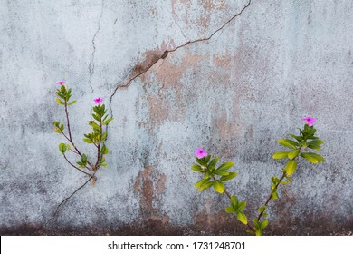 Pink flower plant growing with green leaf, beautiful young tree on crack in pavement background. free pace for adding text word love concept
