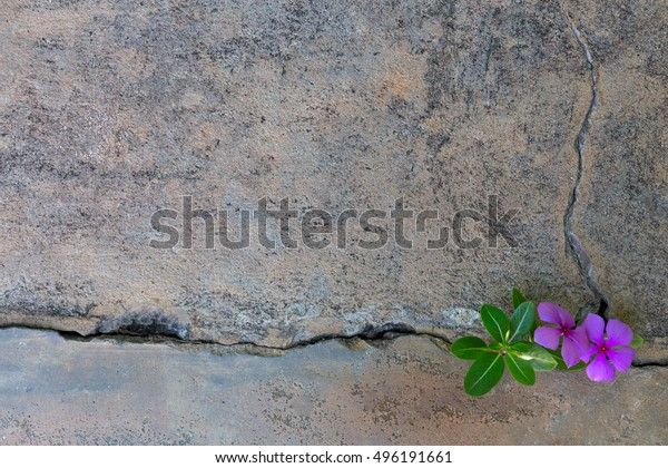 Pink flower plant growing with green leaf, beautiful young tree on crack in pavement background. free pace for adding text word love concept.