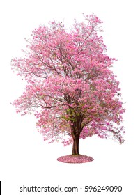 Pink flower tree colorful isolated on white background. This has clipping path.