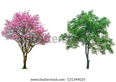 Pink Flower Tree Isolated On White Stockfoto Jetzt Bearbeiten