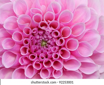 Pink flower in very high detail. Stunningly beautiful and symbolises love, weddings and female decoration.