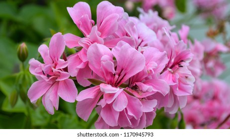 Pink Flower Wallpaper Background Hd Stock Photo Edit Now