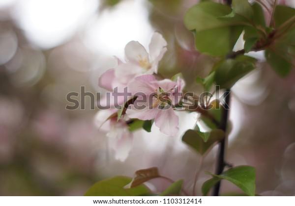 Pink flower walpaper