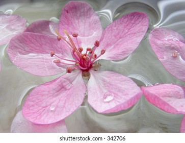 pink flower in water