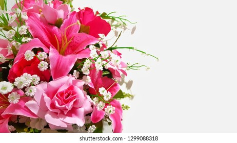 pink flower with white wall background