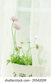 pink flower at the window