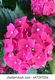 Pink flowers....