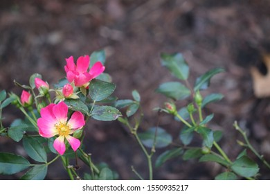 pink flowers against green background