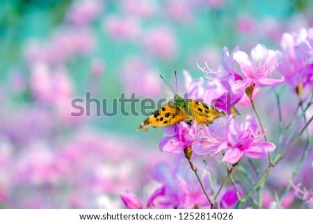 Pink Flowers Azalea Butterfly Stock Photo Edit Now 1252814026
