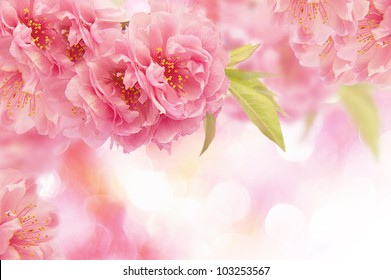 Pink flowers background stock photo royalty free 123764257 pink flowers background mightylinksfo