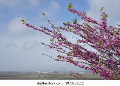 Pink flowers blossom with portugal scape