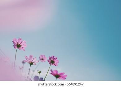 Pink Flowers blue sky