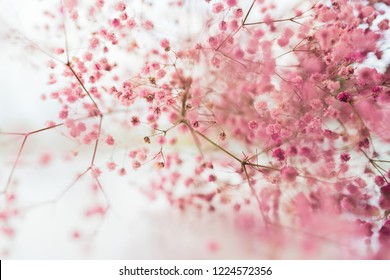 Pink flowers and with blurred background, Spring blosom.