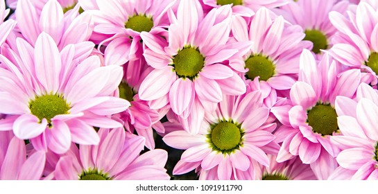 Purple flower with yellow center images stock photos vectors pink flowers with the dark yellow center arrangement in the garden beautiful flower option to mightylinksfo Image collections