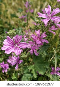 Pink flowers in the field - Shutterstock ID 1097661377