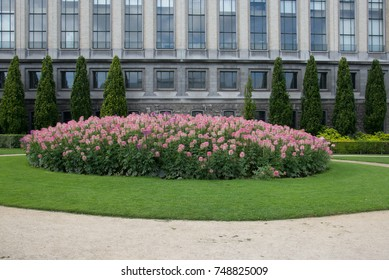 Pink flowers in front of a European palace