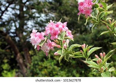 Pink flowers in a garden