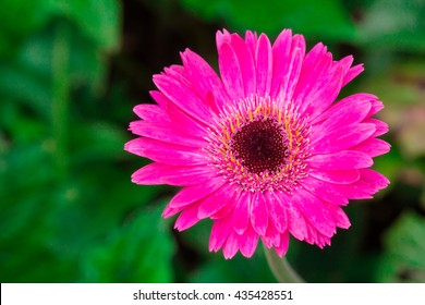 Pink flowers and green background.