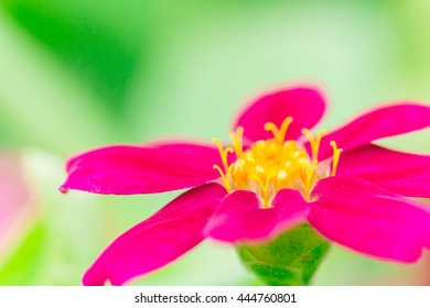 Pink flowers and green background