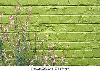 pink flowers green brickwall background