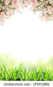 Pink flowers and green grass. Isolated on white background
