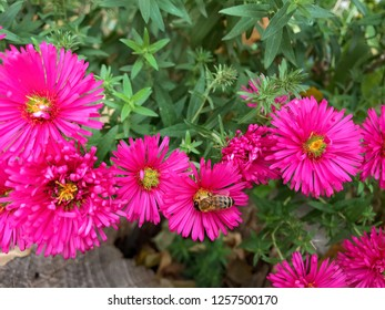 Pink flowers in green leaves and bee.