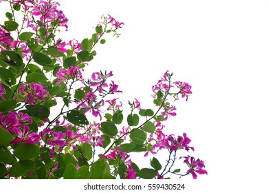 Pink flowers and green leaves on white background