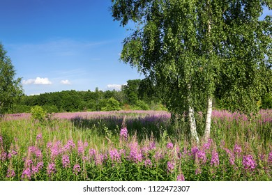 Pink flowers grow in the field and a tree on a sunny summer day. Beautiful natural landscape