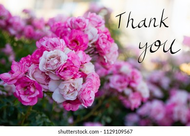 Pink flowers image with a handwriting Thank you message. Conceptual image for thanking someone that you care.