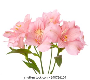 Pink flowers isolated on white. alstroemeria