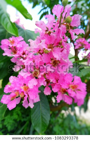 Pink Flowers Large Bouquet On Tree Stock Photo Edit Now 1083293378